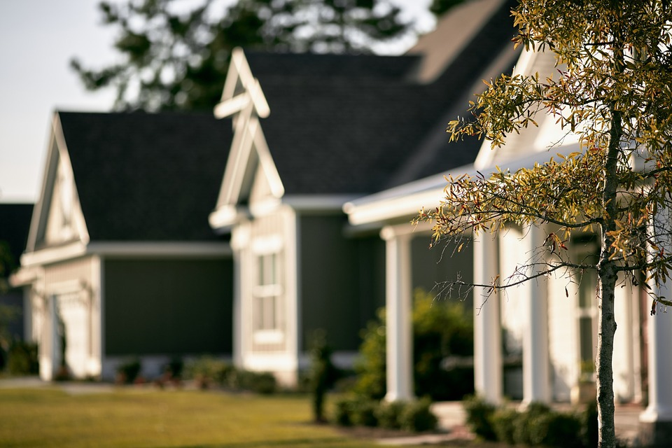 A row of homes with a tree in focus.